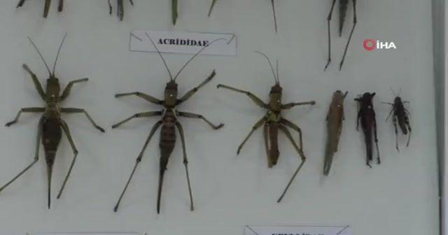 Bu da 'böcek müzesi'