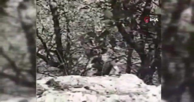 PKK'nın sözde Gabar sorumlusu böyle yakalandı