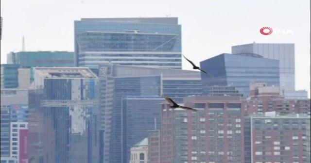 Ceset kokusu alan akbabalar New York'un üzerinde uçmaya başladı