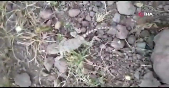 Tunceli'de Topbaş Keler görüntülendi